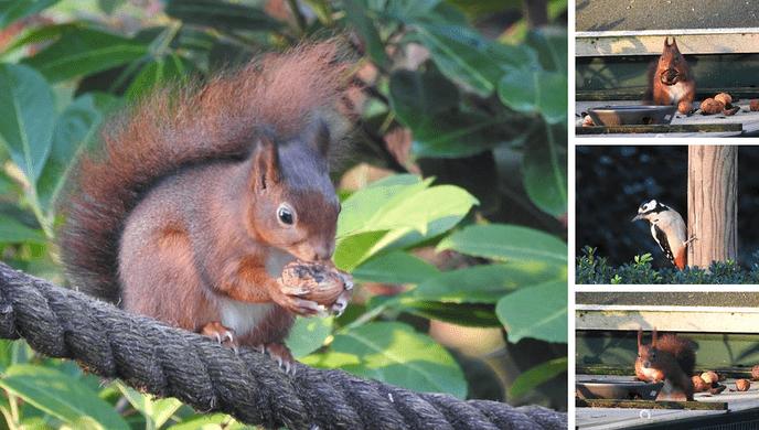 Nieuwe beelden dieren tuin - Foto: eigen geleverde foto