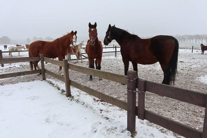 Je kan weer paarden knuffelen tevens rommelmarkt - Foto: eigen geleverde foto