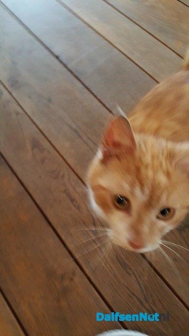 Jonge kitten gevonden (update) - Foto: Ingezonden foto