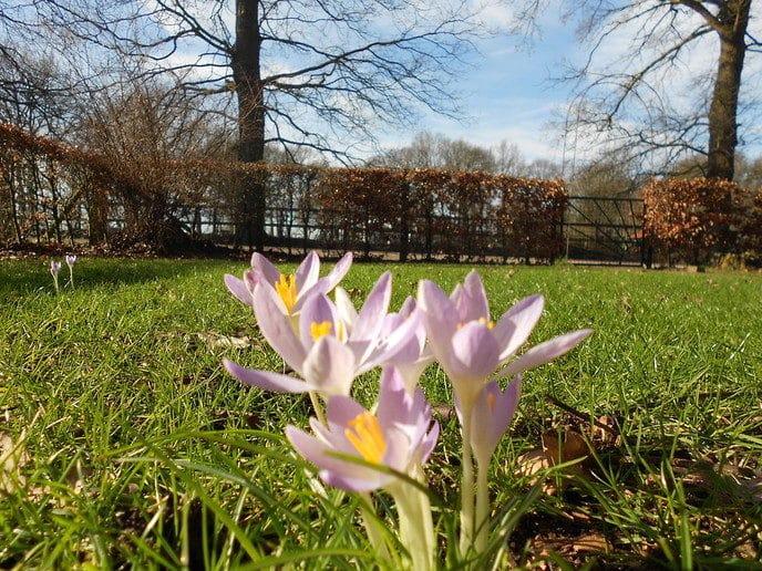 Voorjaar!! - Foto: eigen geleverde foto