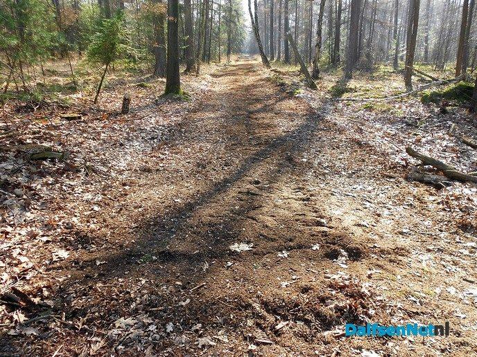 Brandgangen in het bos flink vrijgemaakt