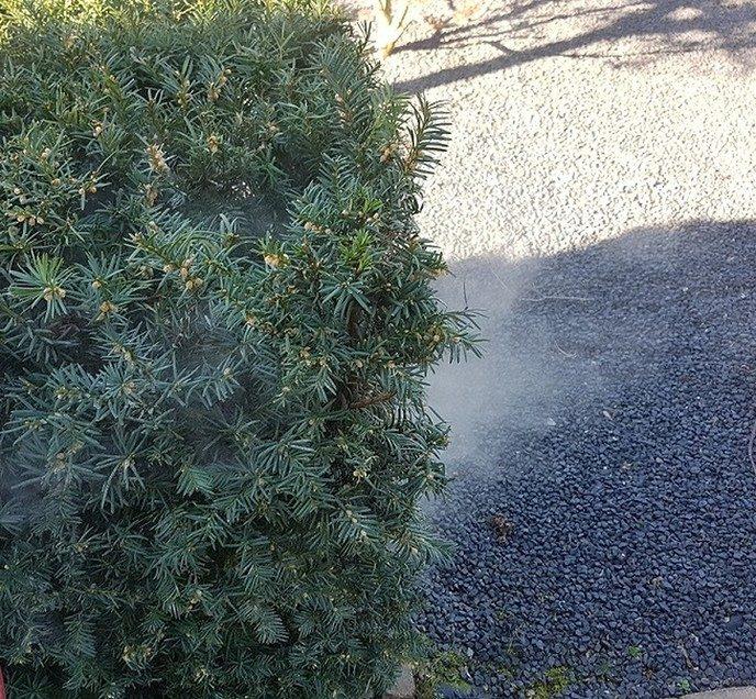 Een hele walm van stoefmeel - Foto: Gruune Jopie