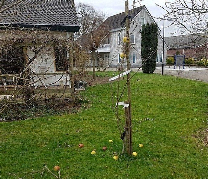 De appel viel niet ver van de boom: nu nog 2 - Foto: Gruune Jopie