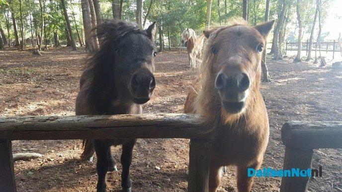 Pony Power voor kids - Foto: Ingezonden foto