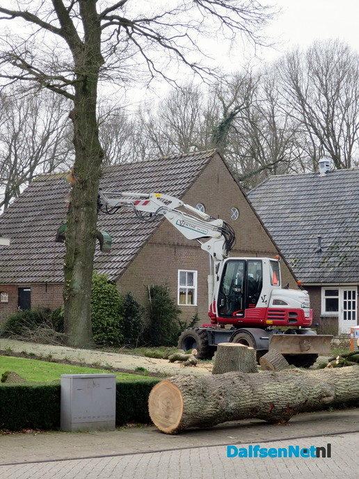 Een zieke boom moest er aan geloven - Foto: Wim