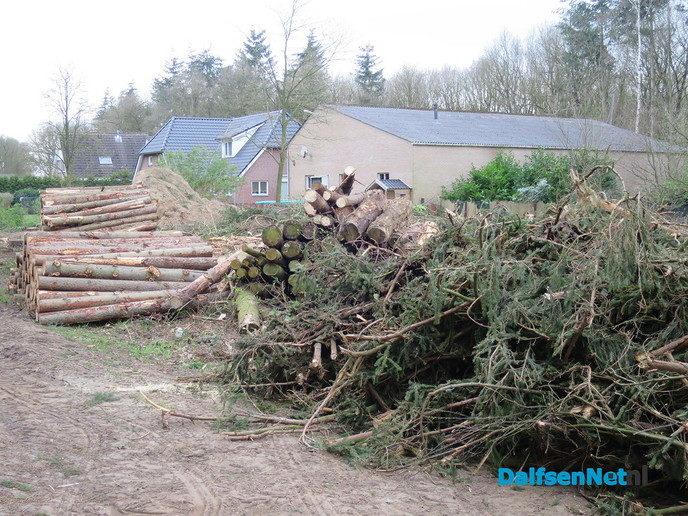 De kêsboomn wördn te groot - Foto: Wim