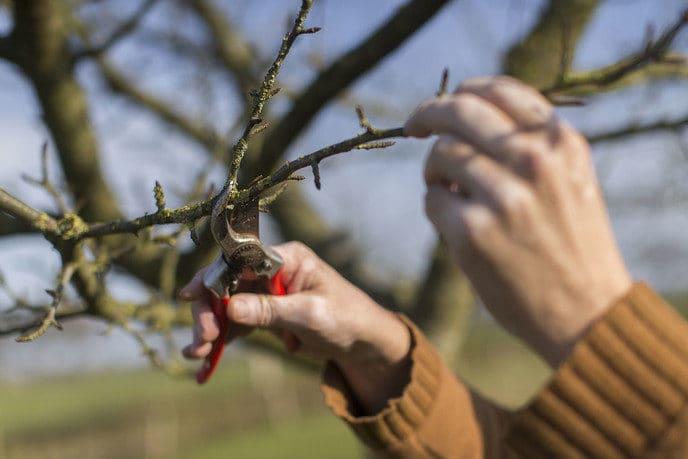 Cursus vormsnoei voor jonge bomen - Foto: eigen geleverde foto