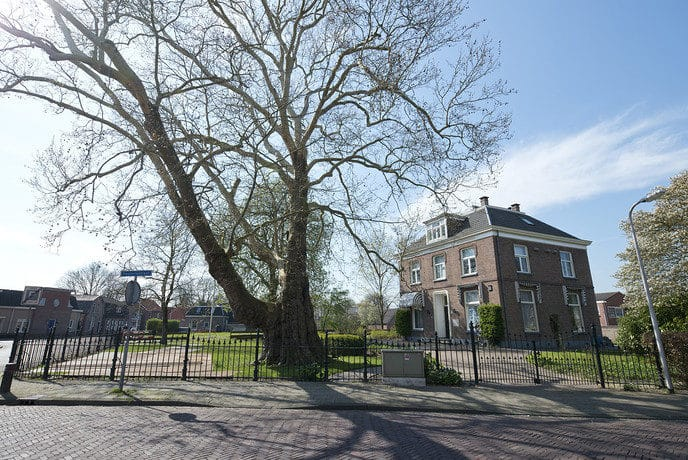 183 Jaar oude reus bij hospice rigoureus gesnoeid - Foto: Geert Bistervels