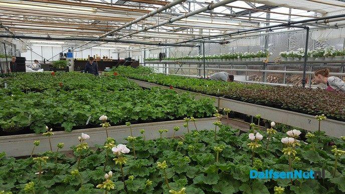 Plantjesmarkt de Ambelt Zwolle - Foto: Ingezonden foto