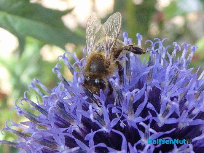 Help de bijen met Hessum Stroomt - Foto: Ingezonden foto