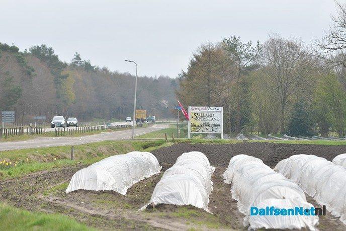 Het aspergeseizoen in beeld bij Tuinderij van der Kolk aan de Hessenweg - Foto: Johan Bokma