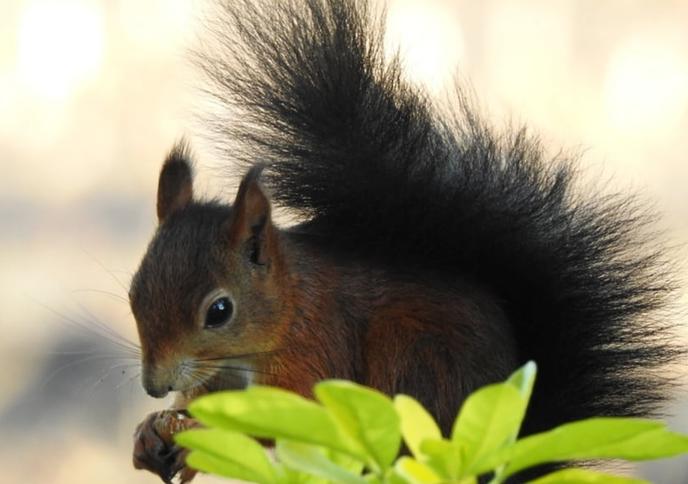 De eekhoorns van Oudlusen - Foto: eigen geleverde foto