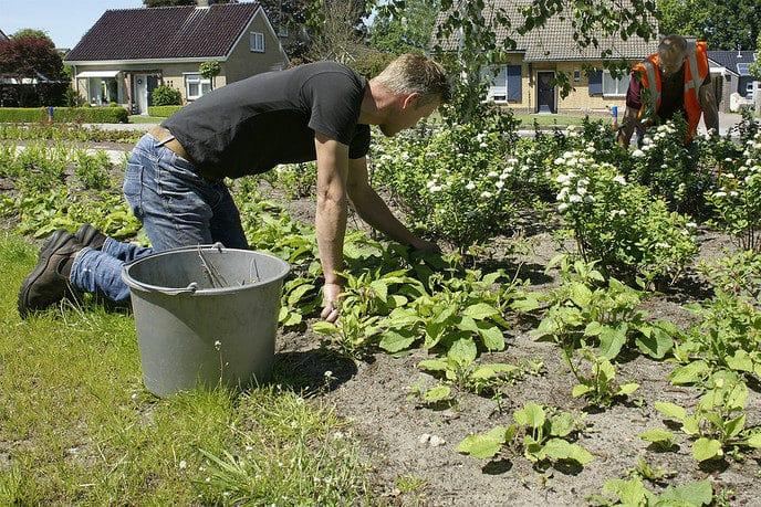 Onderhoud plantsoen bij De Spil - Foto: Paul Scholten
