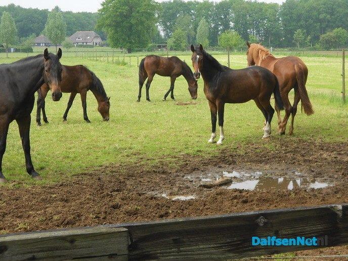 Paarden aan het Maatpad