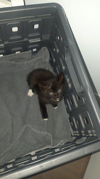 Gevonden; jong katje - Foto: eigen geleverde foto