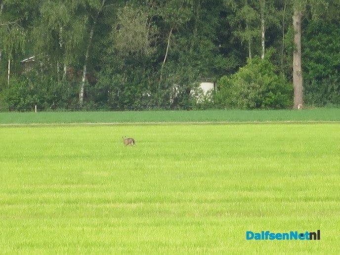 Veel rovers actief in het landschap - Foto: Wim