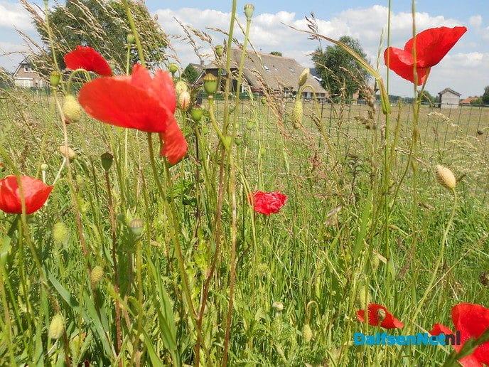 Hoonhorst bloeit, al weer!