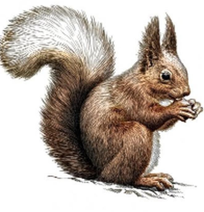 Eekhoorns moeten iets verder springen - Foto: Ingezonden foto