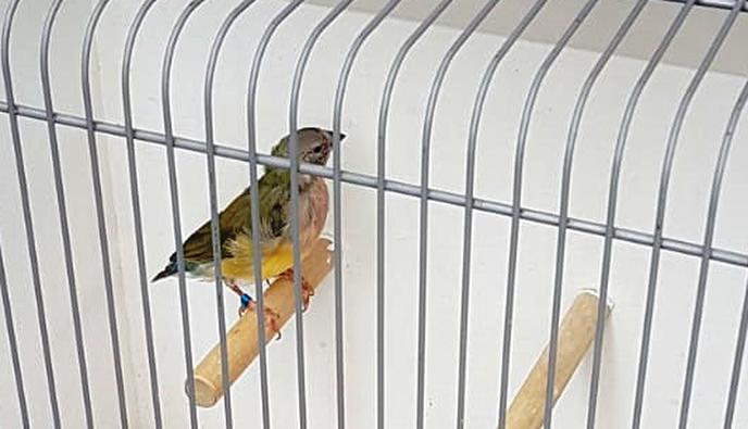 Vogel gevonden op de Gerner Marke - Foto: eigen geleverde foto