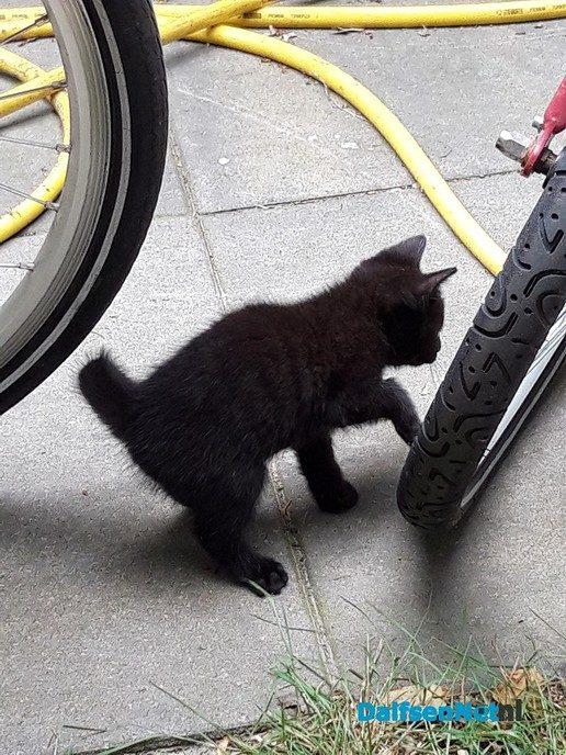 Jonge katjes - Foto: Ingezonden foto