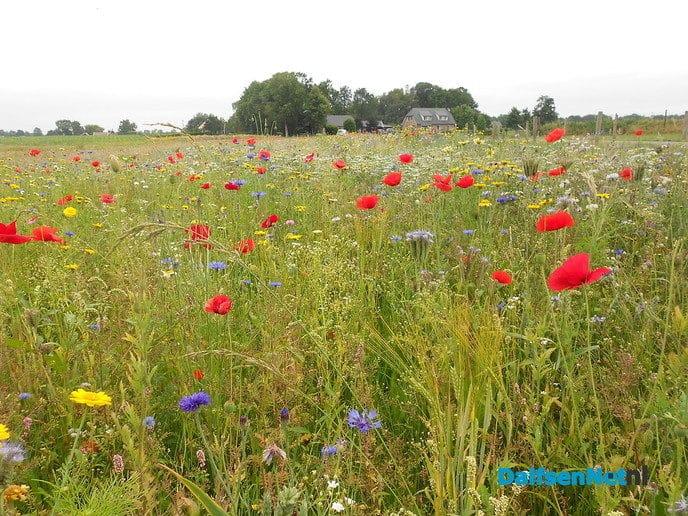 Veldbloemen-park op de Vennenberg