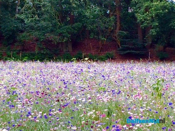 Hessum bloeit - Foto: Ingezonden foto