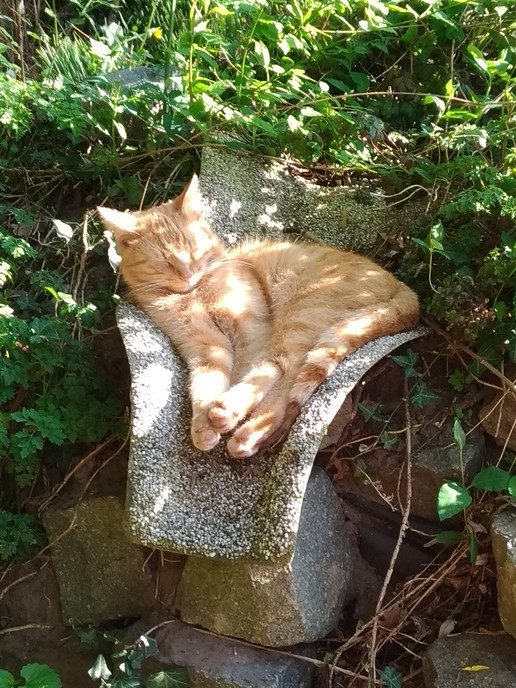 Rode 1 jarige please kat vermist - Foto: eigen geleverde foto