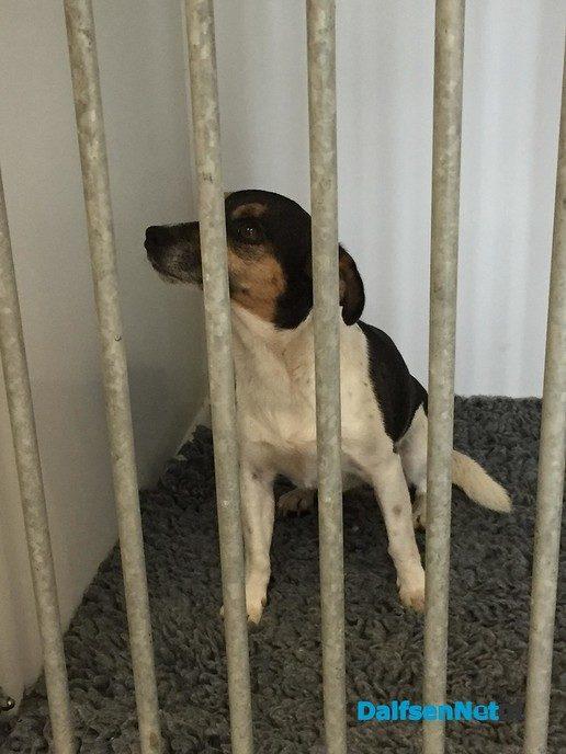 Hond gevonden in Oudleusen - Foto: Ingezonden foto