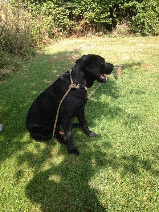"""Hond liep weg maar is terug naar """"hoes""""? - Foto: eigen geleverde foto"""
