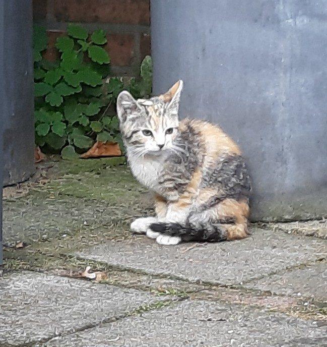 Kitten aan komen lopen - Foto: eigen geleverde foto