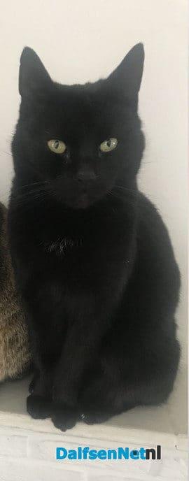 Zwarte kat kwijt en weer terug - Foto: Ingezonden foto