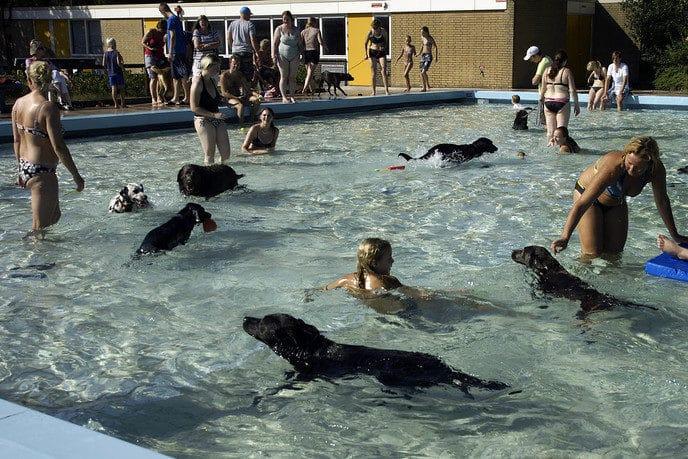Baasje met hond zwemmen - Foto: Paul Scholten