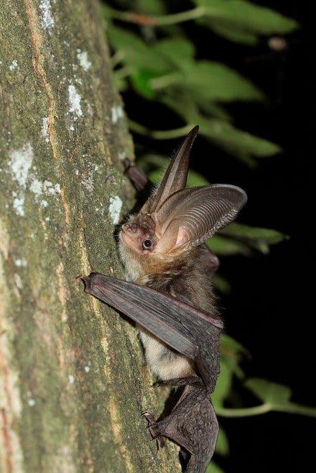 de Nacht van de Vleermuis - Foto: eigen geleverde foto