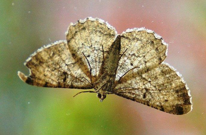 Vlinder mist een stukje - Foto: eigen geleverde foto
