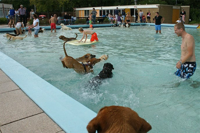 """Hondenzwemmen"" succes - Foto: Paul Scholten"