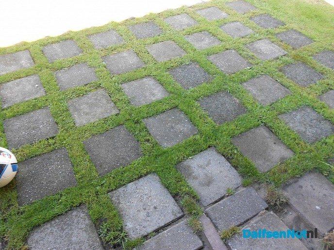 """Stamtafel over """"Tuinen in Dalfsen, groen of beton"""""""