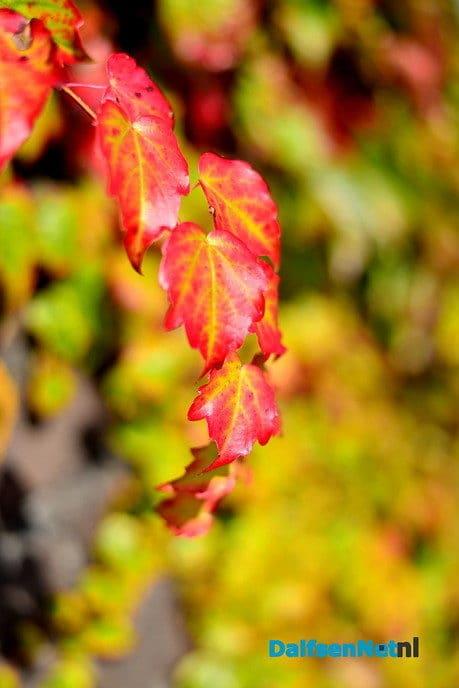 Zomer voorbij en kleurrijke herfst in aantocht - Foto: Ben Jonkman