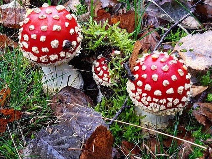 Ingezonden herfstfoto's - Foto: Ingezonden foto