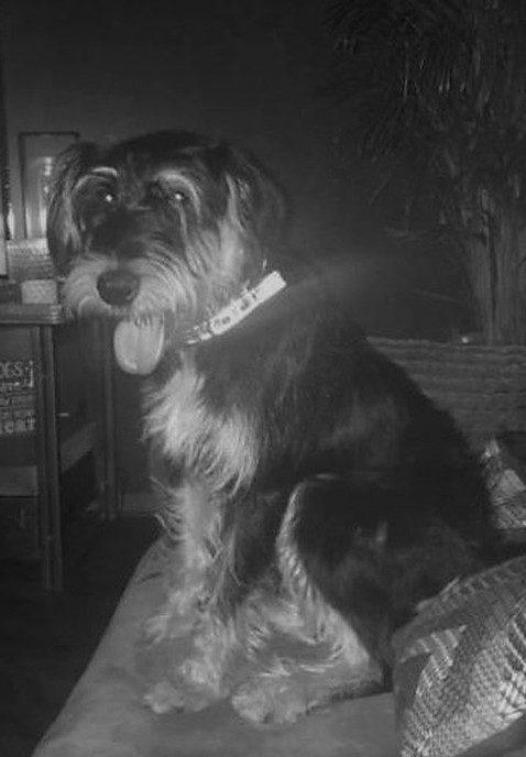 Onze hond Yaris was er van tussen, maar nu weer terug - Foto: eigen geleverde foto