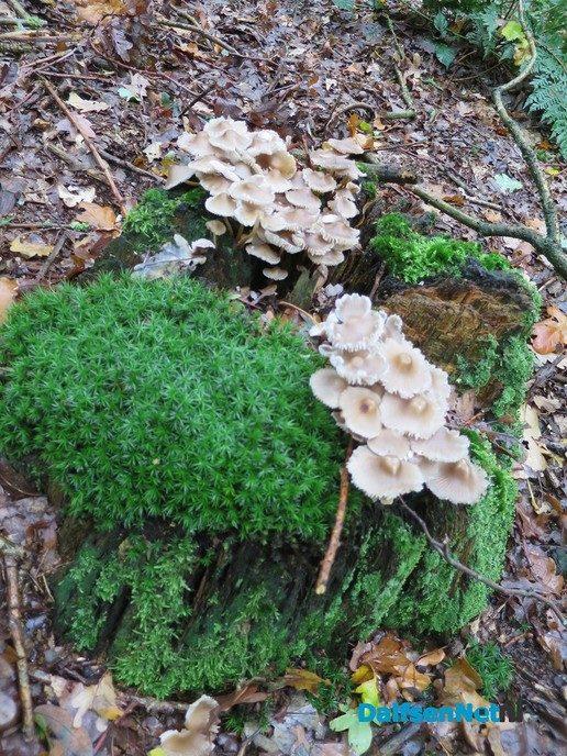 Vandaag geen brommers kieke'n, maar paddenstoel'n kiek'n - Foto: Wim