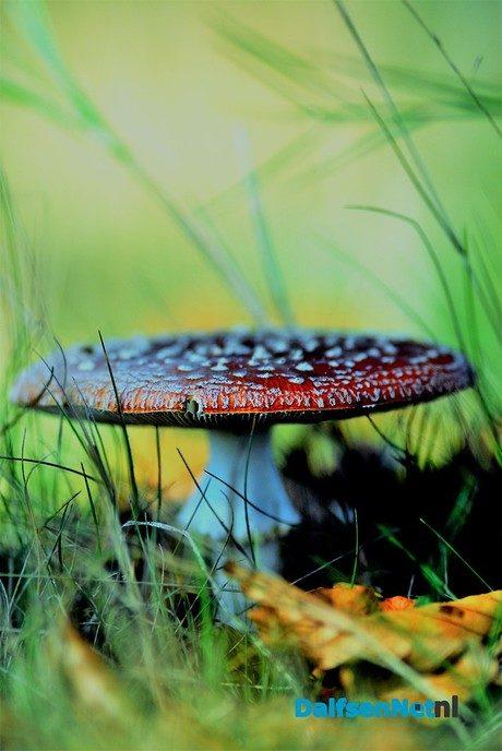 Genieten van de herfst - Foto: Ben Jonkman