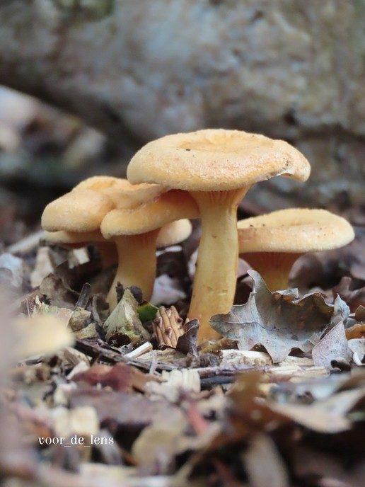 Bij deze wat herfstfoto's - Foto: Ingezonden foto