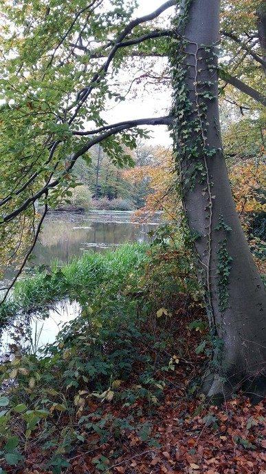 Ook op Landgoed Den Berg is de herfst prachtig - Foto: Ingezonden foto
