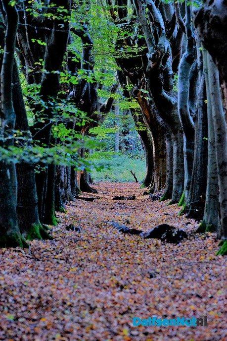 Fotograaf duikt de bladeren in - Foto: Ben Jonkman