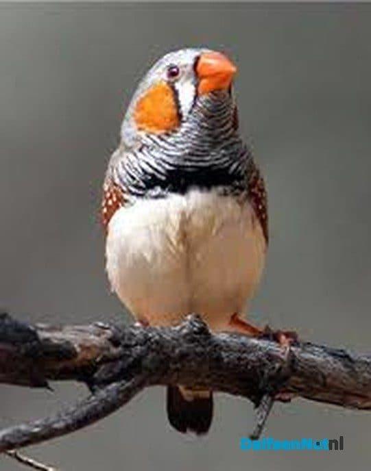 Vogelvereniging De Vogelvriend 60 jaar - Foto: Ingezonden foto