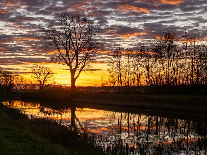 Zwolse natuurfotograaf maakte in Dalfsen deze prachtige foto's - Foto: Ingezonden foto