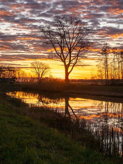 Zwolse natuurfotograaf maakte in Dalfsen deze prachtige foto's - Foto: eigen geleverde foto
