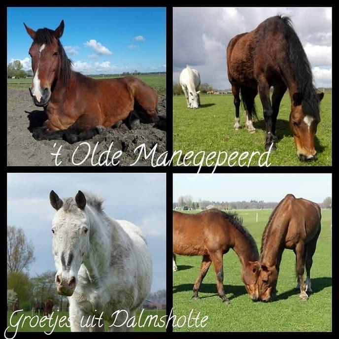 Spoed: Rika zoekt nieuw opvangadres voor paarden - Foto: eigen geleverde foto