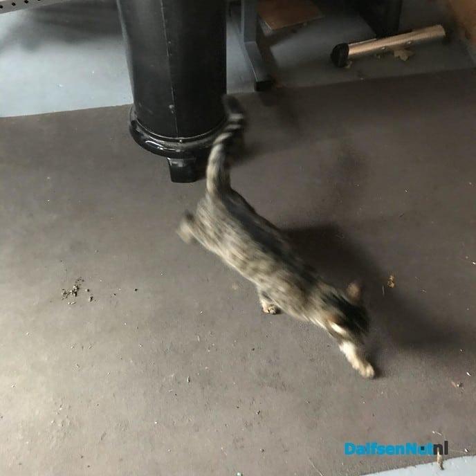 Kat aan komen lopen - Foto: Ingezonden foto
