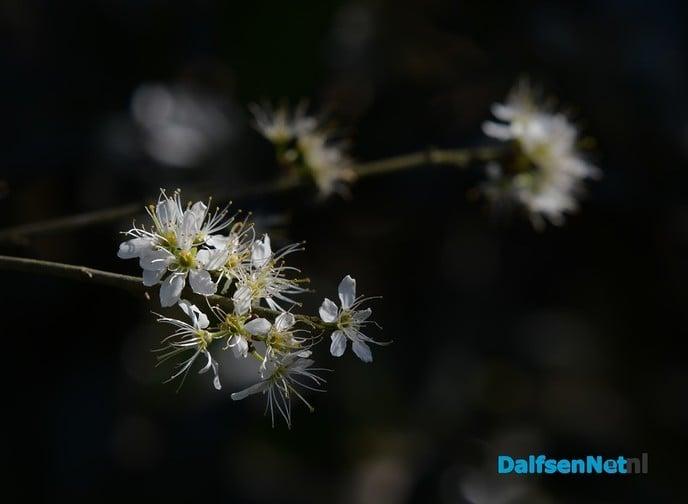 Het voorjaar ontluikt op landgoed De Horte - Foto: Johan Bokma